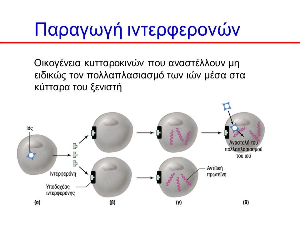Παραγωγή ιντερφερονών Οικογένεια κυτταροκινών που αναστέλλουν μη ειδικώς τον πολλαπλασιασμό των ιών μέσα στα κύτταρα του ξενιστή