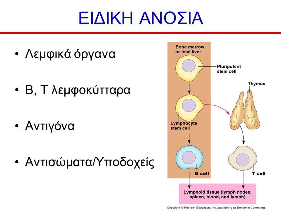 ΕΙΔΙΚΗ ΑΝΟΣΙΑ Λεμφικά όργανα B, T λεμφοκύτταρα Αντιγόνα Αντισώματα/Υποδοχείς