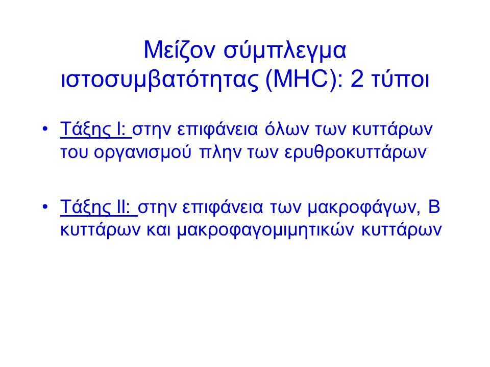 Μείζον σύμπλεγμα ιστοσυμβατότητας (ΜΗC): 2 τύποι Τάξης Ι: στην επιφάνεια όλων των κυττάρων του οργανισμού πλην των ερυθροκυττάρων Τάξης ΙΙ: στην επιφάνεια των μακροφάγων, Β κυττάρων και μακροφαγομιμητικών κυττάρων