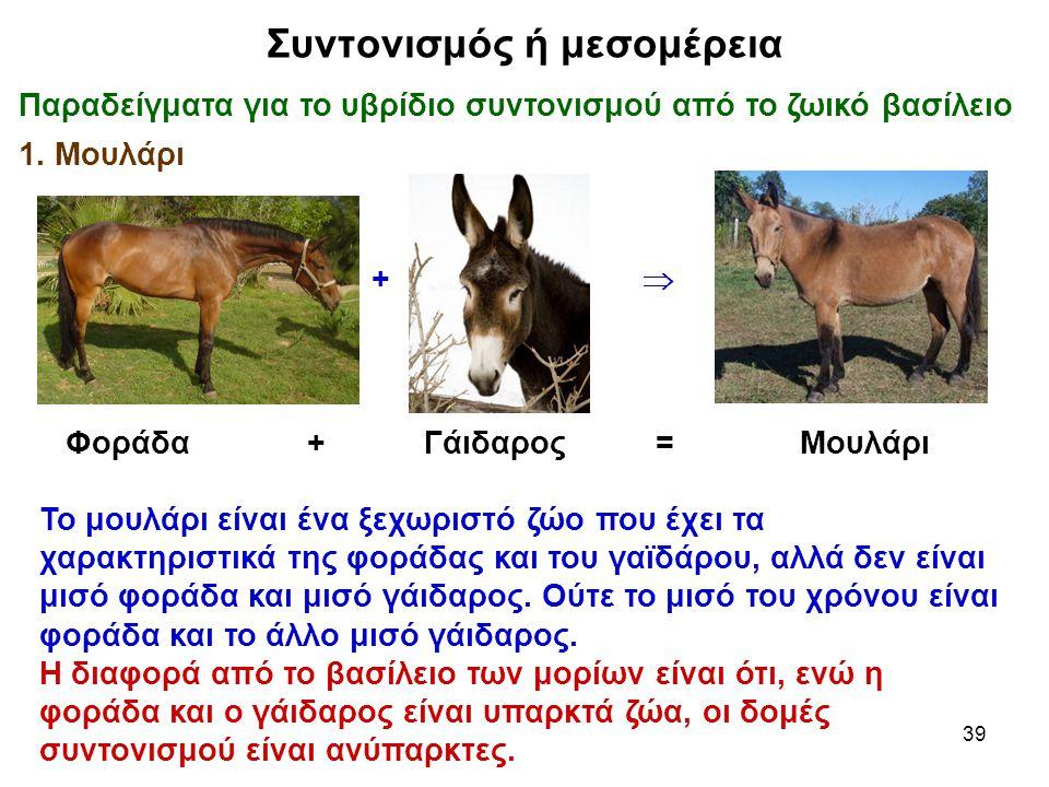 39 Συντονισμός ή μεσομέρεια Παραδείγματα για το υβρίδιο συντονισμού από το ζωικό βασίλειο 1. Μουλάρι Φοράδα + Γάιδαρος = Μουλάρι Το μουλάρι είναι ένα