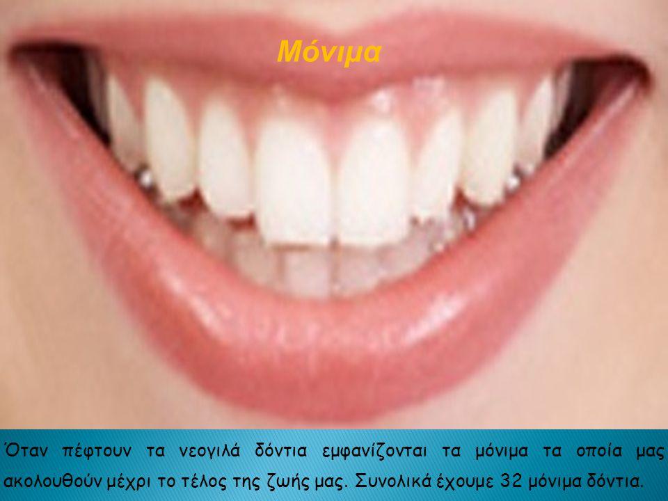 Όταν πέφτουν τα νεογιλά δόντια εμφανίζονται τα μόνιμα τα οποία μας ακολουθούν μέχρι το τέλος της ζωής μας.