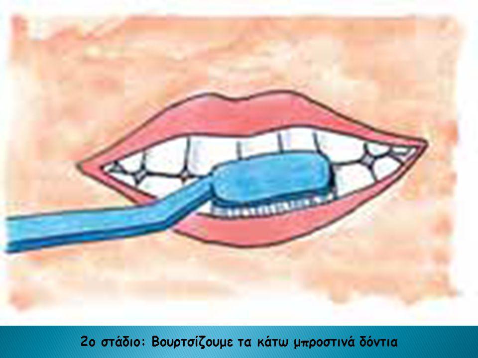 2ο στάδιο: Βουρτσίζουμε τα κάτω μπροστινά δόντια