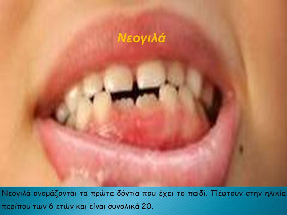 Νεογιλά ονομάζονται τα πρώτα δόντια που έχει το παιδί.