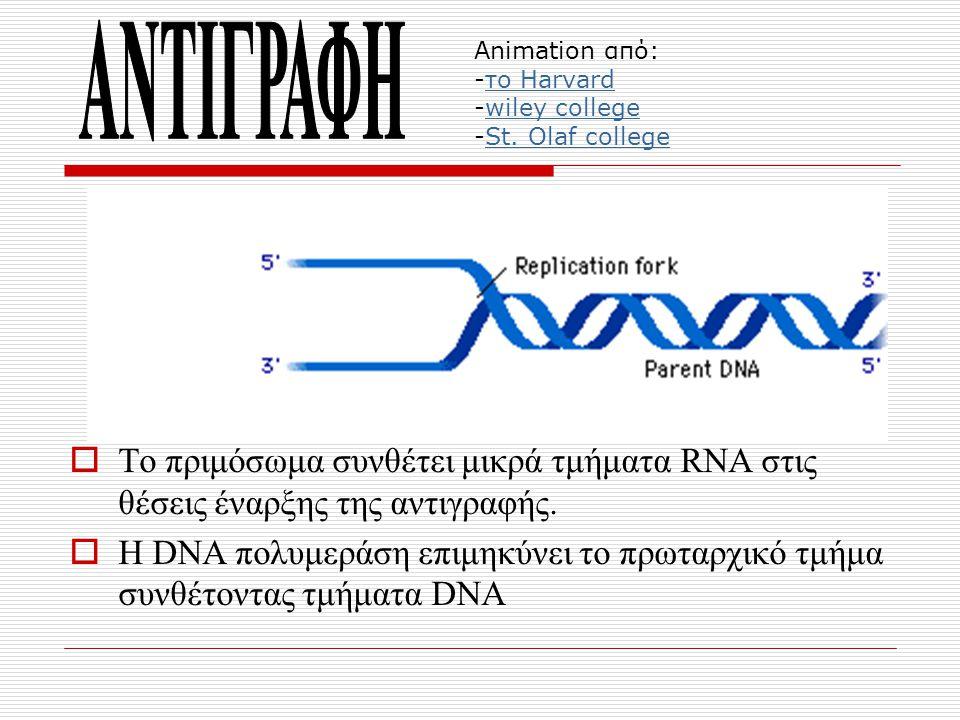Animation από: -το Harvard -wiley college -St. Olaf collegeτο Harvardwiley collegeSt. Olaf college  Το πριμόσωμα συνθέτει μικρά τμήματα RNA στις θέσε