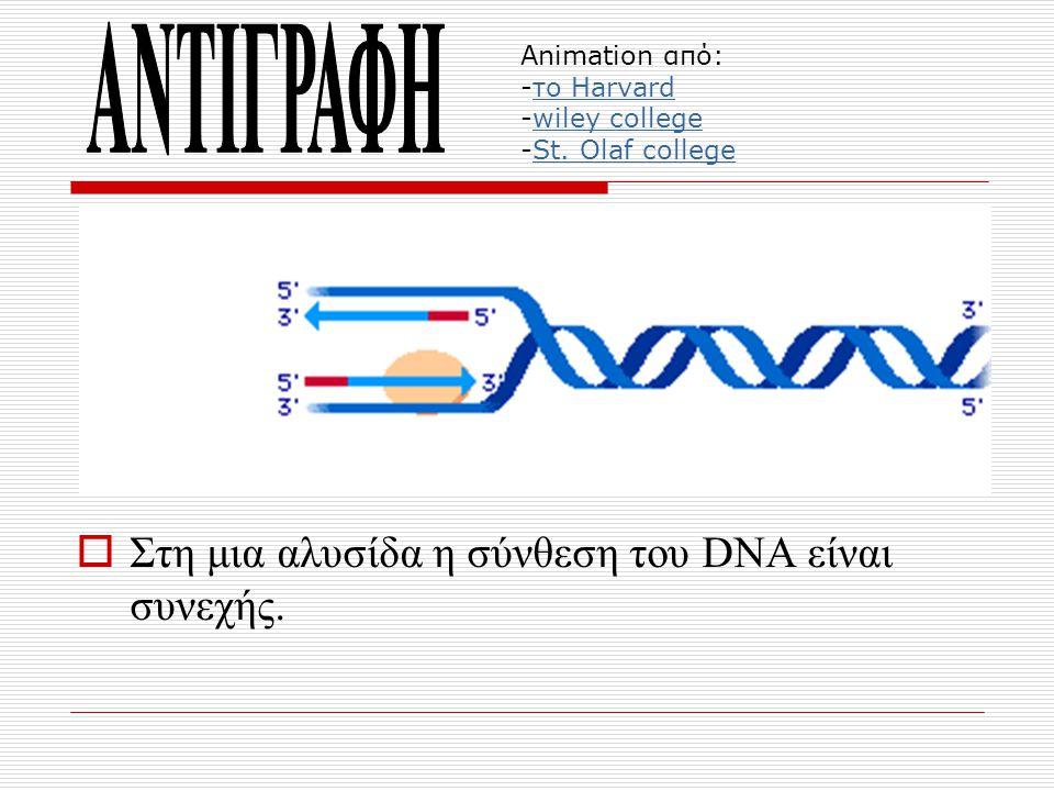  Στη μια αλυσίδα η σύνθεση του DNA είναι συνεχής. Animation από: -το Harvard -wiley college -St. Olaf collegeτο Harvardwiley collegeSt. Olaf college