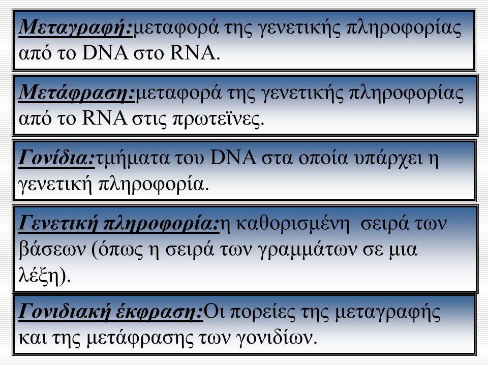 Μεταγραφή:μεταφορά της γενετικής πληροφορίας από το DNA στο RNA. Μετάφραση:μεταφορά της γενετικής πληροφορίας από το RNA στις πρωτεϊνες. Γονίδια:τμήμα