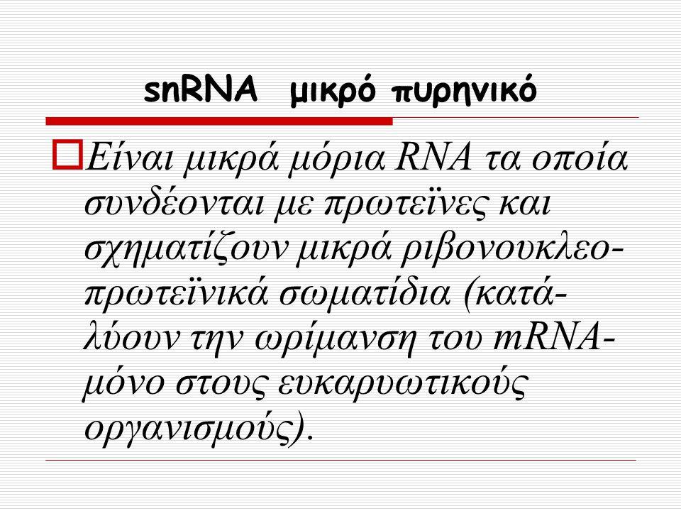 snRNA μικρό πυρηνικό  Είναι μικρά μόρια RNA τα οποία συνδέονται με πρωτεϊνες και σχηματίζουν μικρά ριβονουκλεο- πρωτεϊνικά σωματίδια (κατά- λύουν την
