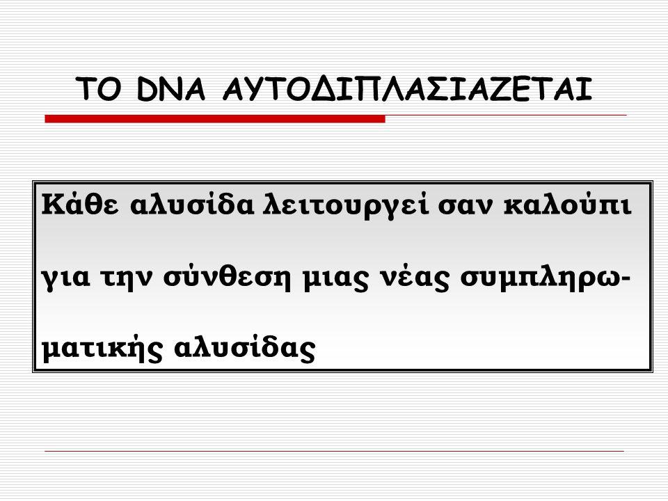 ΤΟ DNA ΑΥΤΟΔΙΠΛΑΣΙΑΖΕΤΑΙ Κάθε αλυσίδα λειτουργεί σαν καλούπι για την σύνθεση μιας νέας συμπληρω- ματικής αλυσίδας
