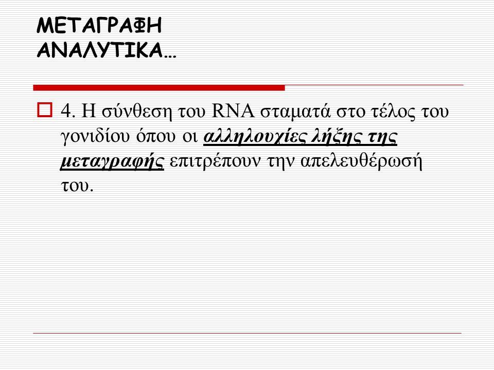 ΜΕΤΑΓΡΑΦΗ ΑΝΑΛΥΤΙΚΑ…  4. Η σύνθεση του RNA σταματά στο τέλος του γονιδίου όπου οι αλληλουχίες λήξης της μεταγραφής επιτρέπουν την απελευθέρωσή του.