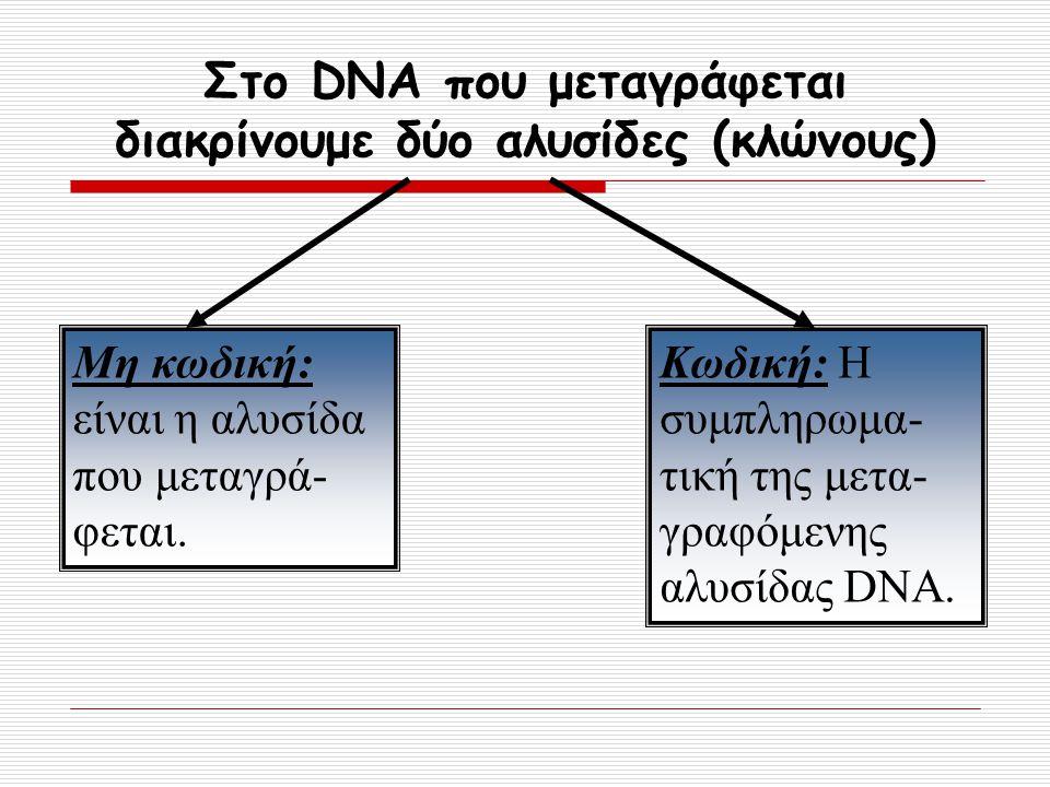 Στο DNA που μεταγράφεται διακρίνουμε δύο αλυσίδες (κλώνους) Μη κωδική: είναι η αλυσίδα που μεταγρά- φεται. Κωδική: Η συμπληρωμα- τική της μετα- γραφόμ