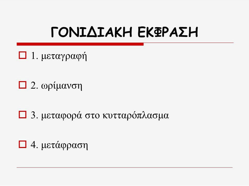 ΓΟΝΙΔΙΑΚΗ ΕΚΦΡΑΣΗ  1. μεταγραφή  2. ωρίμανση  3. μεταφορά στο κυτταρόπλασμα  4. μετάφραση
