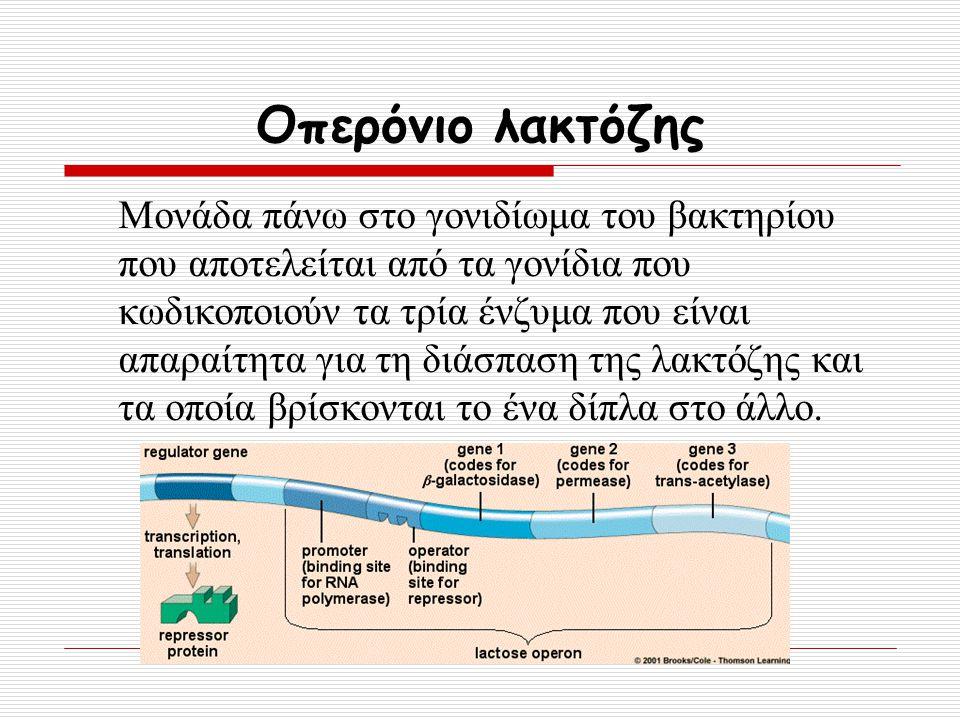 Οπερόνιο λακτόζης Μονάδα πάνω στο γονιδίωμα του βακτηρίου που αποτελείται από τα γονίδια που κωδικοποιούν τα τρία ένζυμα που είναι απαραίτητα για τη δ