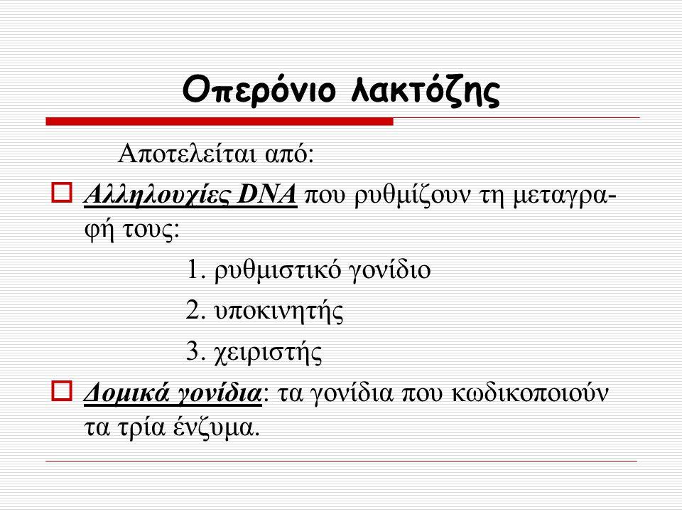 Οπερόνιο λακτόζης Αποτελείται από:  Αλληλουχίες DNA που ρυθμίζουν τη μεταγρα- φή τους: 1. ρυθμιστικό γονίδιο 2. υποκινητής 3. χειριστής  Δομικά γονί