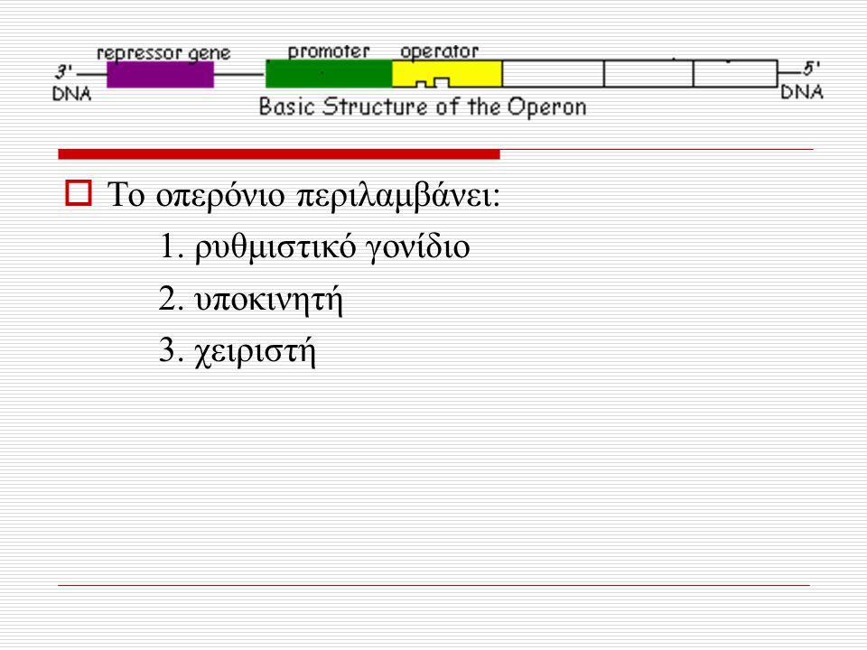  Το οπερόνιο περιλαμβάνει: 1. ρυθμιστικό γονίδιο 2. υποκινητή 3. χειριστή