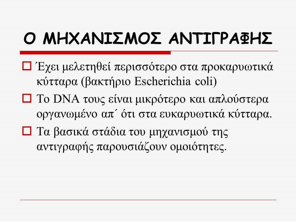 Ο ΜΗΧΑΝΙΣΜΟΣ ΑΝΤΙΓΡΑΦΗΣ  Έχει μελετηθεί περισσότερο στα προκαρυωτικά κύτταρα (βακτήριο Escherichia coli)  Το DNA τους είναι μικρότερο και απλούστερα