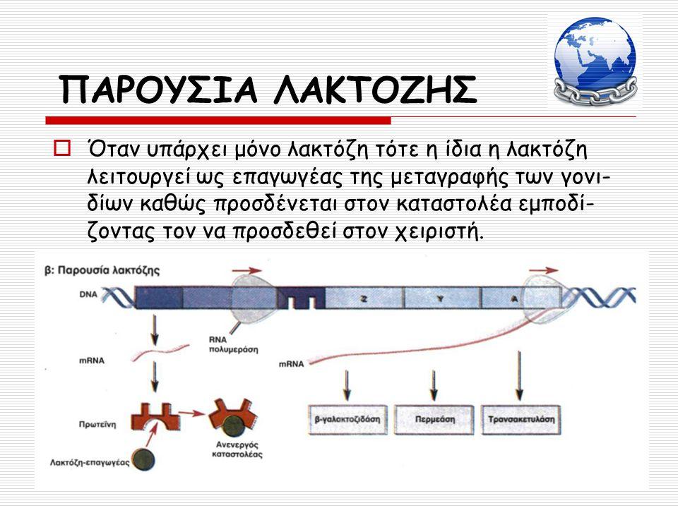  Όταν υπάρχει μόνο λακτόζη τότε η ίδια η λακτόζη λειτουργεί ως επαγωγέας της μεταγραφής των γονι- δίων καθώς προσδένεται στον καταστολέα εμποδί- ζοντ