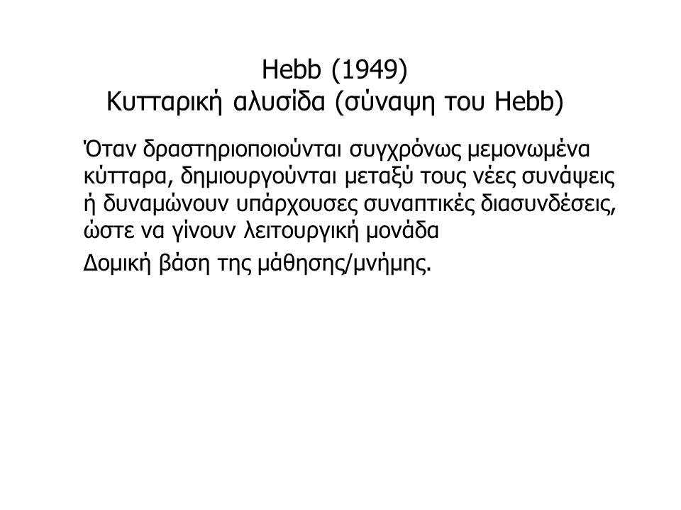 Hebb (1949) Κυτταρική αλυσίδα (σύναψη του Hebb) Όταν δραστηριοποιούνται συγχρόνως μεμονωμένα κύτταρα, δημιουργούνται μεταξύ τους νέες συνάψεις ή δυναμ