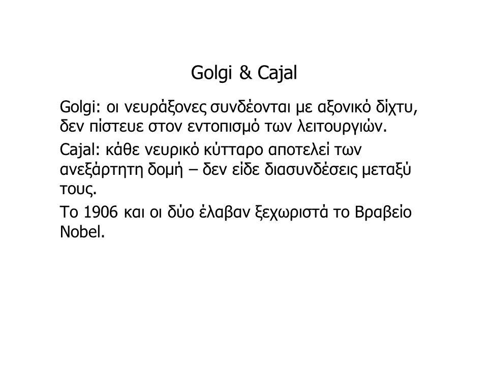 Golgi & Cajal Golgi: οι νευράξονες συνδέονται με αξονικό δίχτυ, δεν πίστευε στον εντοπισμό των λειτουργιών. Cajal: κάθε νευρικό κύτταρο αποτελεί των α