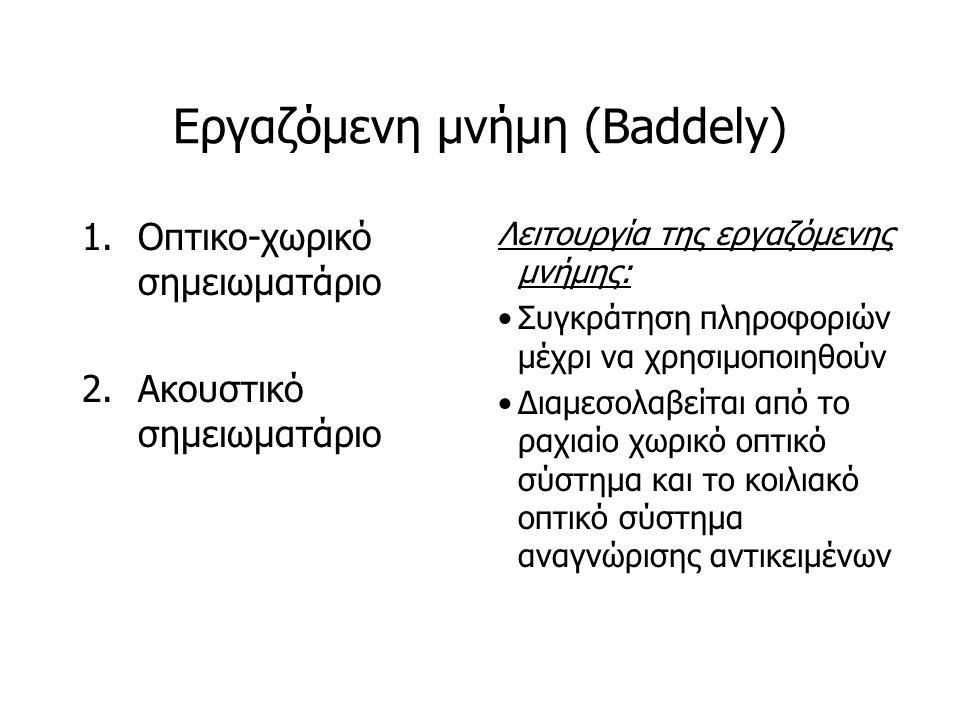 Εργαζόμενη μνήμη (Baddely) 1.Οπτικο-χωρικό σημειωματάριο 2.Ακουστικό σημειωματάριο Λειτουργία της εργαζόμενης μνήμης: Συγκράτηση πληροφοριών μέχρι να χρησιμοποιηθούν Διαμεσολαβείται από το ραχιαίο χωρικό οπτικό σύστημα και το κοιλιακό οπτικό σύστημα αναγνώρισης αντικειμένων