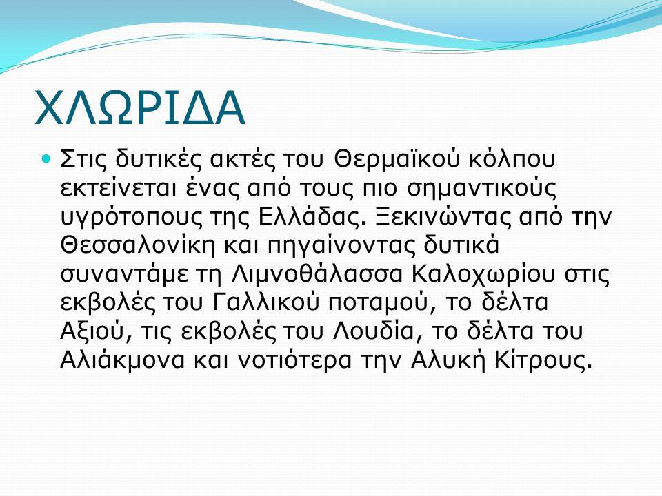 ΧΛΩΡΙΔΑ Στις δυτικές ακτές του Θερμαϊκού κόλπου εκτείνεται ένας από τους πιο σημαντικούς υγρότοπους της Ελλάδας. Ξεκινώντας από την Θεσσαλονίκη και πη