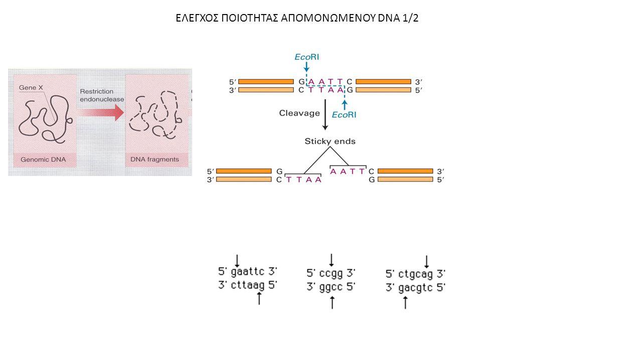 ΕΛΕΓΧΟΣ ΠΟΙΟΤΗΤΑΣ ΑΠΟΜΟΝΩΜΕΝΟΥ DNA 1/2