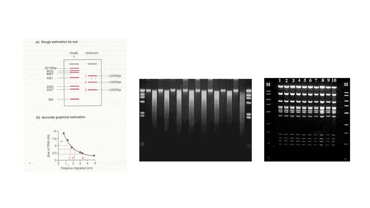 Αλυσιδωτή Αντίδραση Πολυμεράσης (PCR) Η αλυσιδωτή αντίδραση πολυμεράσης είναι μέθοδος παραγωγής μεγάλου αριθμού αντιγράφων συγκεκριμένων μικρών αλληλουχιών DNA – λογαριθμική αύξηση PCR: 1985, Βραβείο Nobel για τον Kary Mullis in 1993