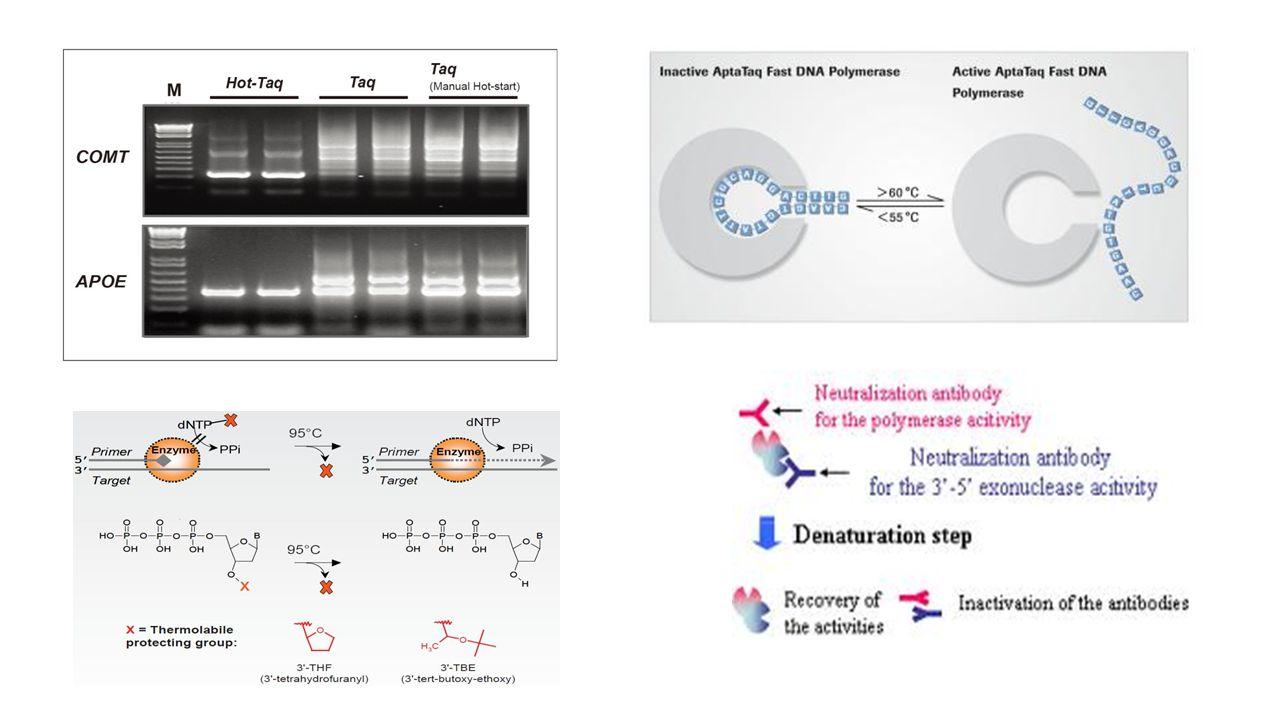 Εφαρμογές PCR Ανίχνευση DNA και RNA με τεράστια ευαισθησία  ανίχνευση ιών κ.α.