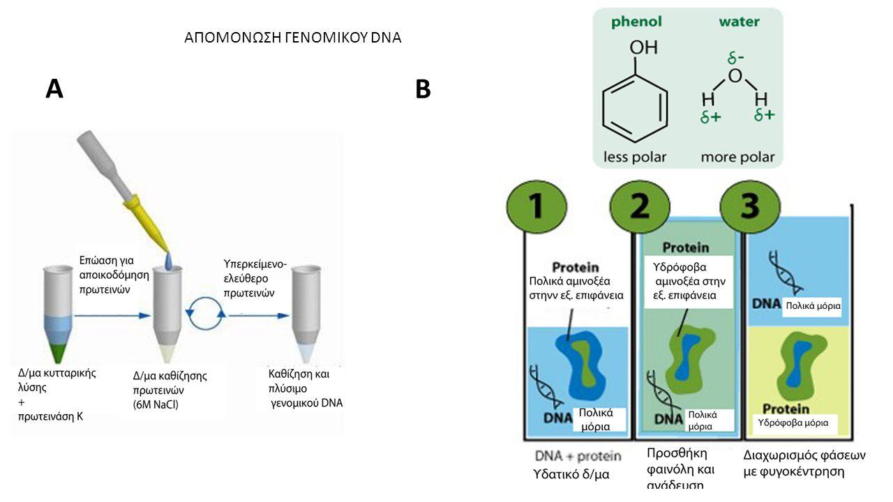 ΑΠΟΜΟΝΩΣΗ ΓΕΝΟΜΙΚΟΥ DNA A B