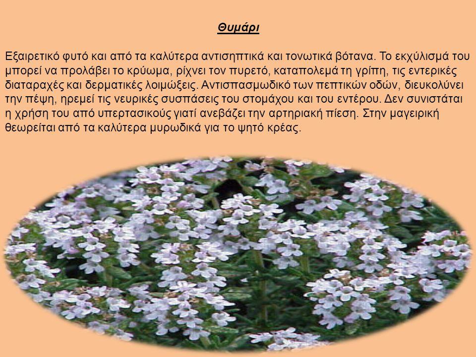 Θυμάρι Εξαιρετικό φυτό και από τα καλύτερα αντισηπτικά και τονωτικά βότανα.