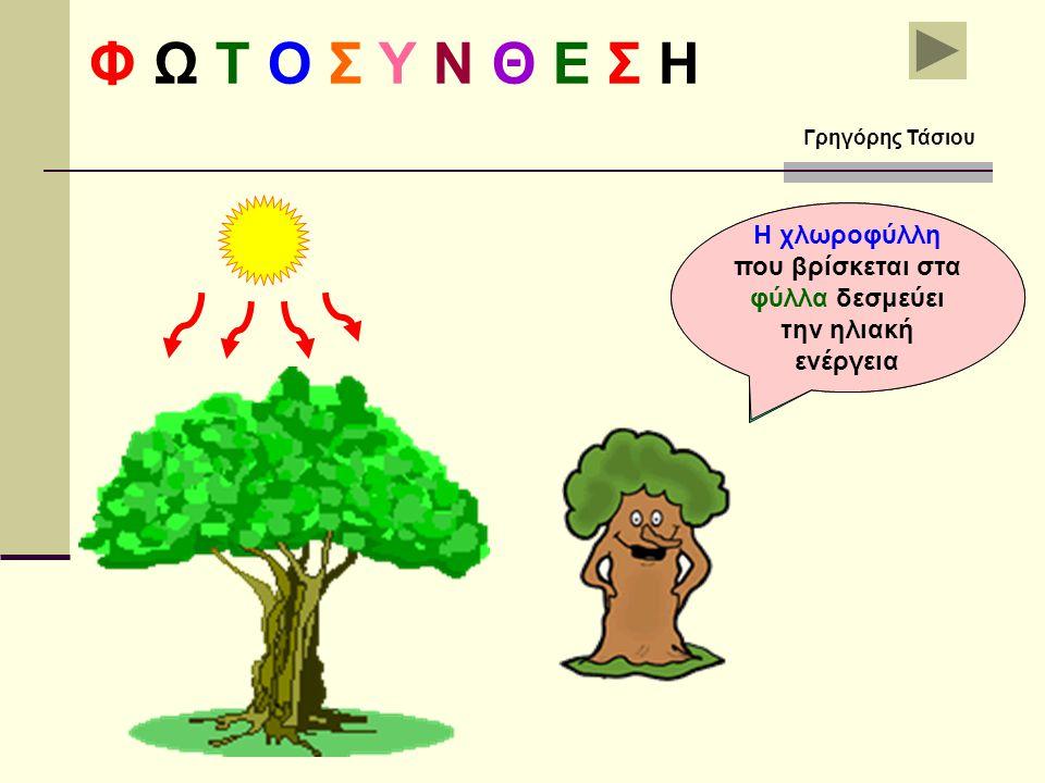Τα φύλλα είναι το εργοστάσιο που παράγει την τροφή των φυτών Η χλωροφύλλη που βρίσκεται στα φύλλα δεσμεύει την ηλιακή ενέργεια Φ Ω Τ Ο Σ Υ Ν Θ Ε Σ Η Γρηγόρης Τάσιου