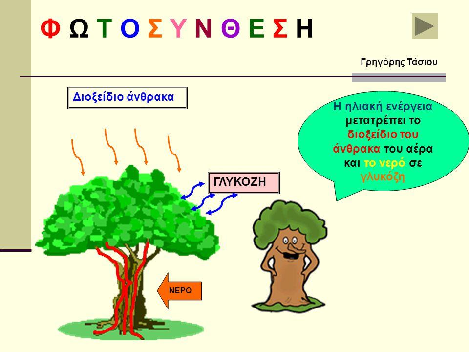 Τα φύλλα είναι το εργοστάσιο που παράγει την τροφή των φυτών Η χλωροφύλλη που βρίσκεται στα φύλλα δεσμεύει την ηλιακή ενέργεια Φ Ω Τ Ο Σ Υ Ν Θ Ε Σ Η Γ