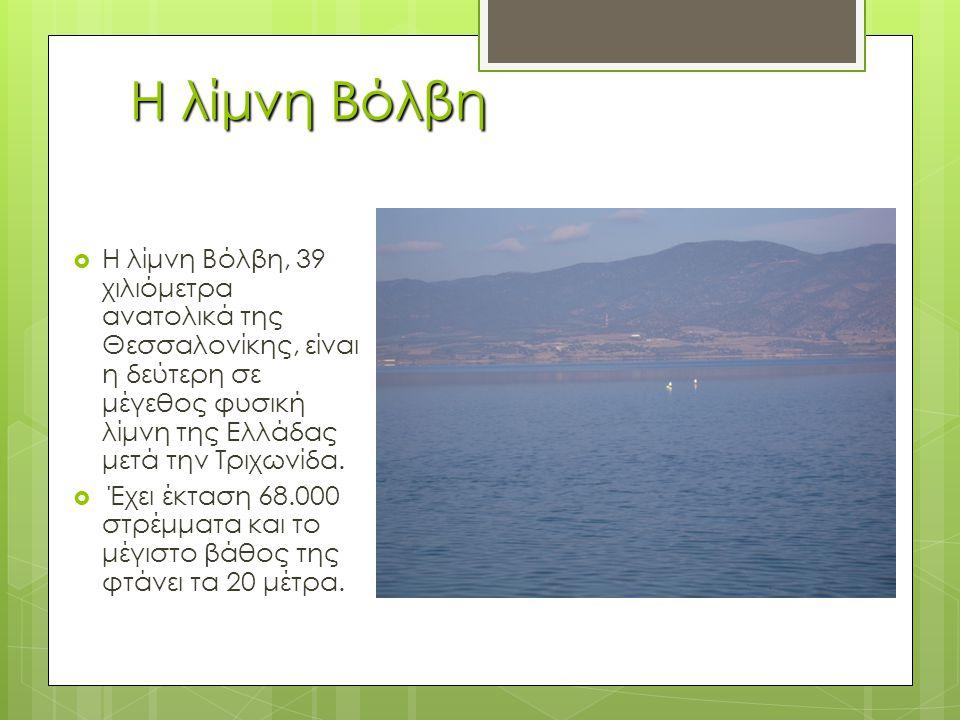 Η λίμνη Βόλβη  Η λίμνη Βόλβη, 39 χιλιόμετρα ανατολικά της Θεσσαλονίκης, είναι η δεύτερη σε μέγεθος φυσική λίμνη της Ελλάδας μετά την Τριχωνίδα.
