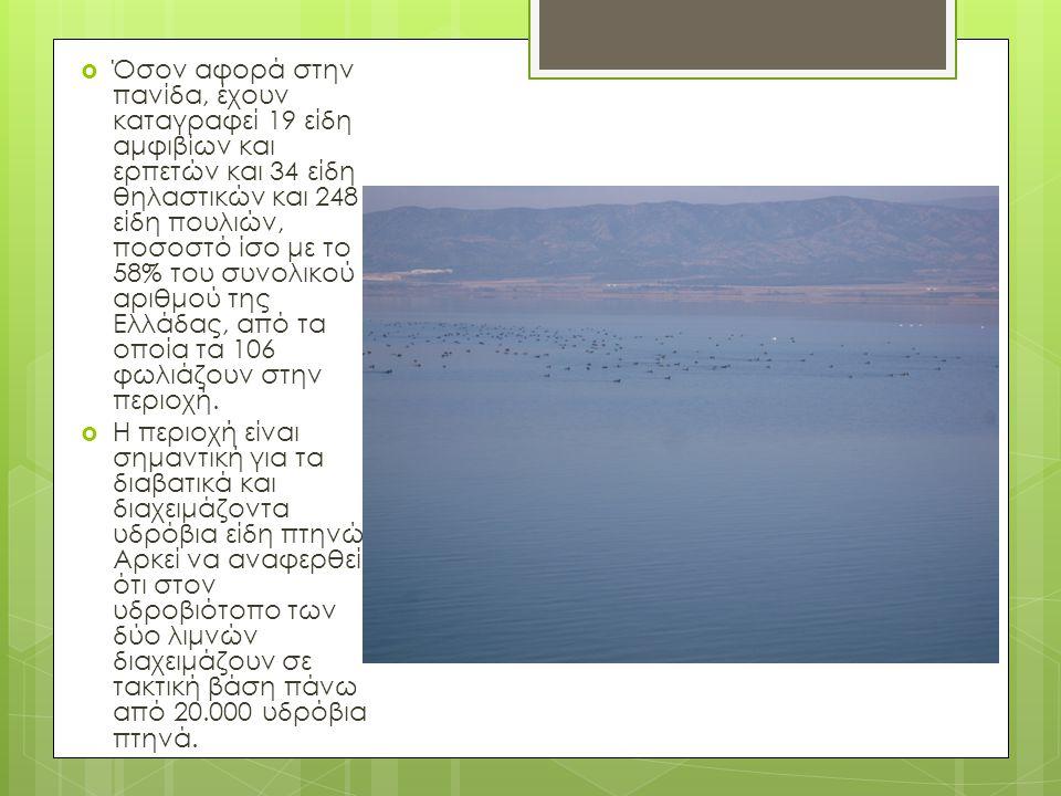  Όσον αφορά στην πανίδα, έχουν καταγραφεί 19 είδη αμφιβίων και ερπετών και 34 είδη θηλαστικών και 248 είδη πουλιών, ποσοστό ίσο με το 58% του συνολικού αριθμού της Ελλάδας, από τα οποία τα 106 φωλιάζουν στην περιοχή.