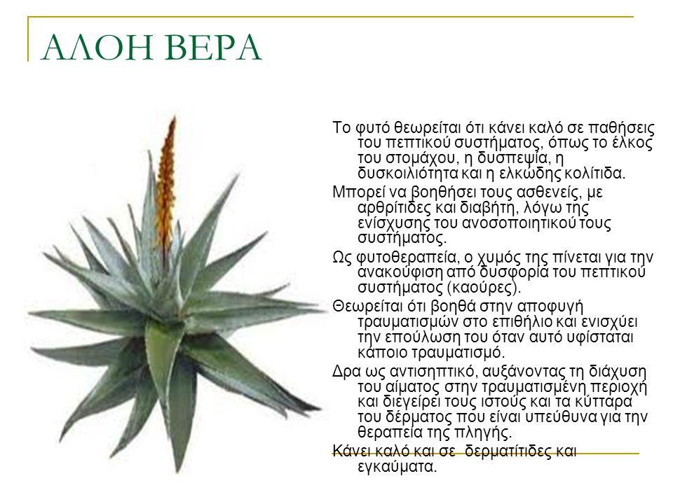 ΑΛΟΗ ΒΕΡΑ Το φυτό θεωρείται ότι κάνει καλό σε παθήσεις του πεπτικού συστήματος, όπως το έλκος του στομάχου, η δυσπεψία, η δυσκοιλιότητα και η ελκώδης
