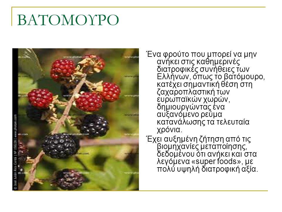 ΒΑΤΟΜΟΥΡΟ Ένα φρούτο που μπορεί να μην ανήκει στις καθημερινές διατροφικές συνήθειες των Ελλήνων, όπως το βατόμουρο, κατέχει σημαντική θέση στη ζαχαρο