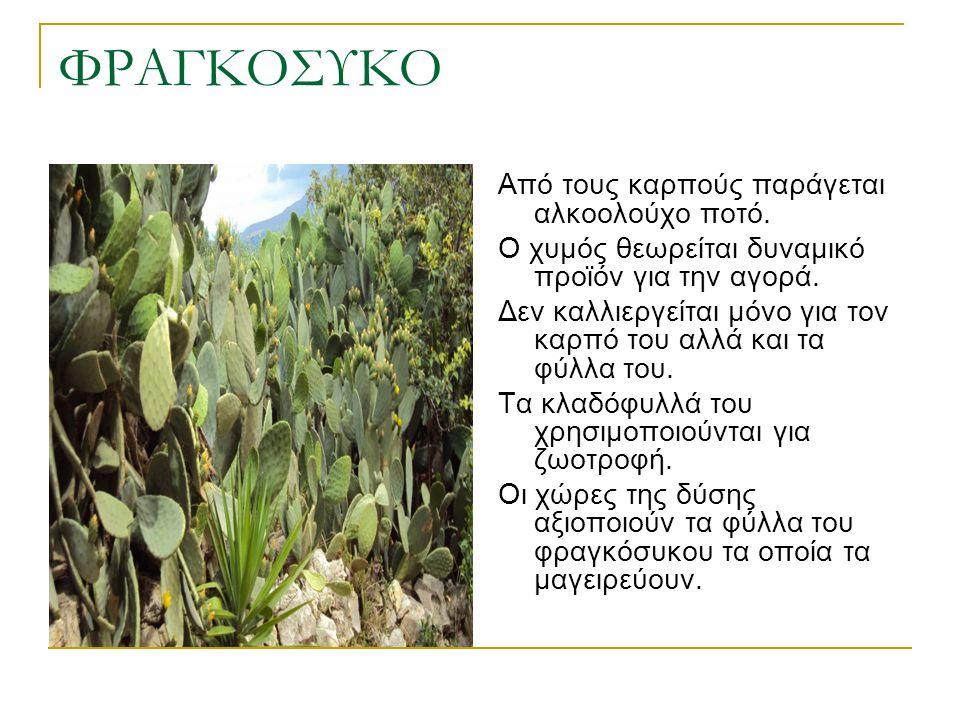 ΦΡΑΓΚΟΣΥΚΟ Από τους καρπούς παράγεται αλκοολούχο ποτό. Ο χυμός θεωρείται δυναμικό προϊόν για την αγορά. Δεν καλλιεργείται μόνο για τον καρπό του αλλά