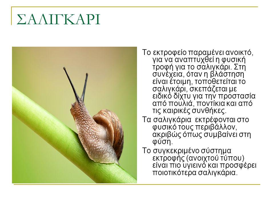 ΣΑΛΙΓΚΑΡΙ Το εκτροφείο παραμένει ανοικτό, για να αναπτυχθεί η φυσική τροφή για το σαλιγκάρι. Στη συνέχεια, όταν η βλάστηση είναι έτοιμη, τοποθετείται