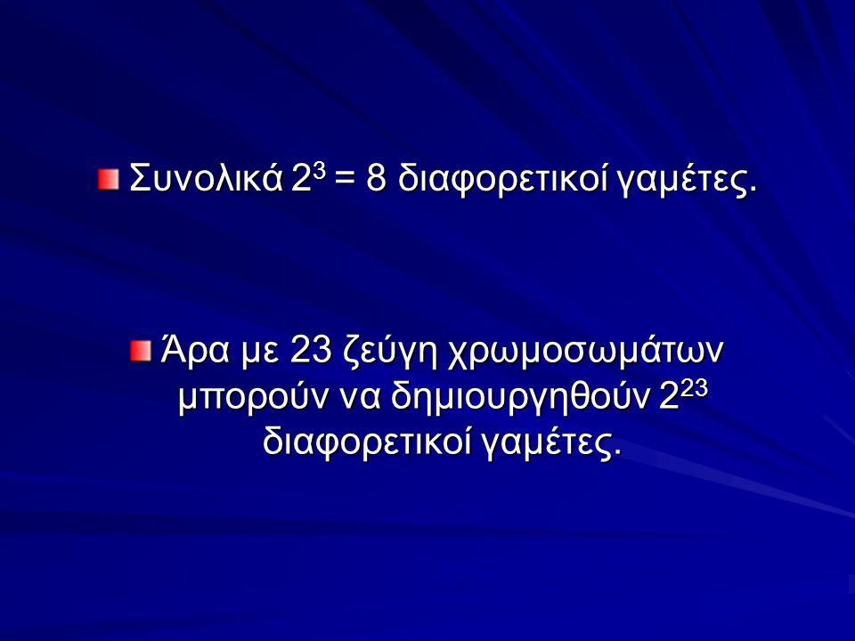 Συνολικά 2 3 = 8 διαφορετικοί γαμέτες. Άρα με 23 ζεύγη χρωμοσωμάτων μπορούν να δημιουργηθούν 2 23 διαφορετικοί γαμέτες.