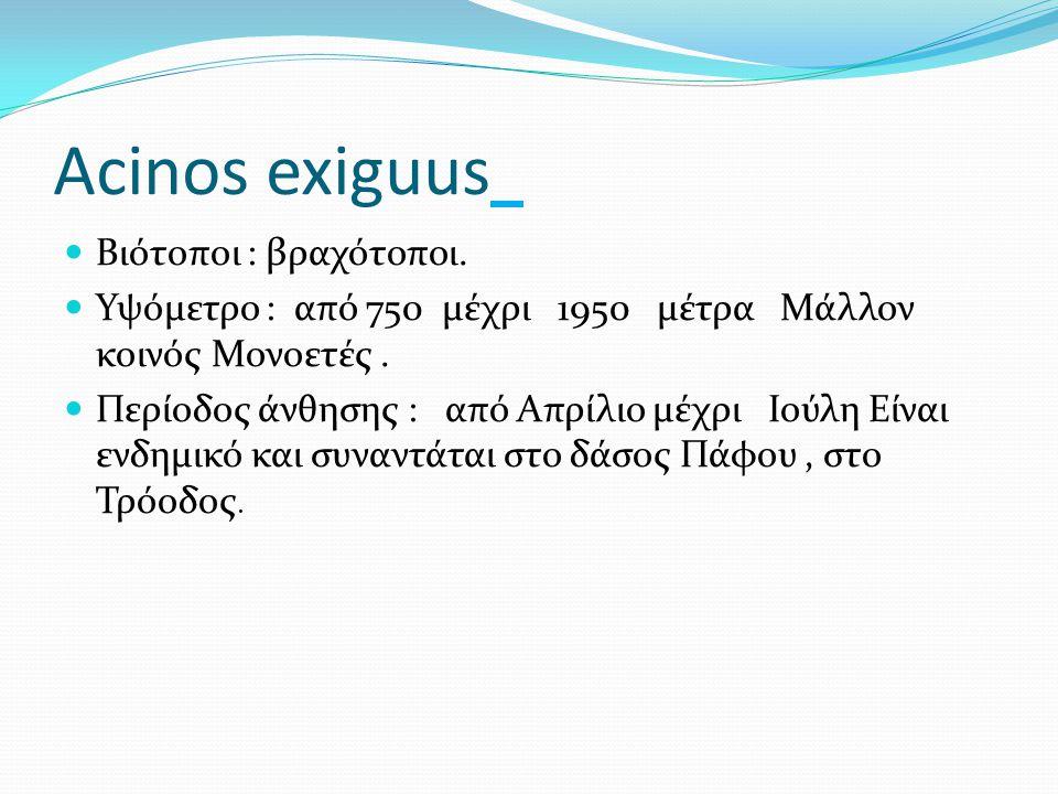 Acinos exiguus Βιότοποι : βραχότοποι. Υψόμετρο : από 750 μέχρι 1950 μέτρα Μάλλον κοινός Μονοετές. Περίοδος άνθησης : από Απρίλιο μέχρι Ιούλη Είναι ενδ