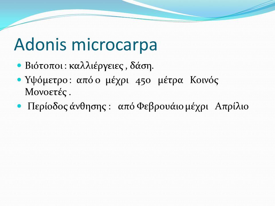 Adonis microcarpa Βιότοποι : καλλιέργειες, δάση. Υψόμετρο : από 0 μέχρι 450 μέτρα Κοινός Μονοετές. Περίοδος άνθησης : από Φεβρουάιο μέχρι Απρίλιο