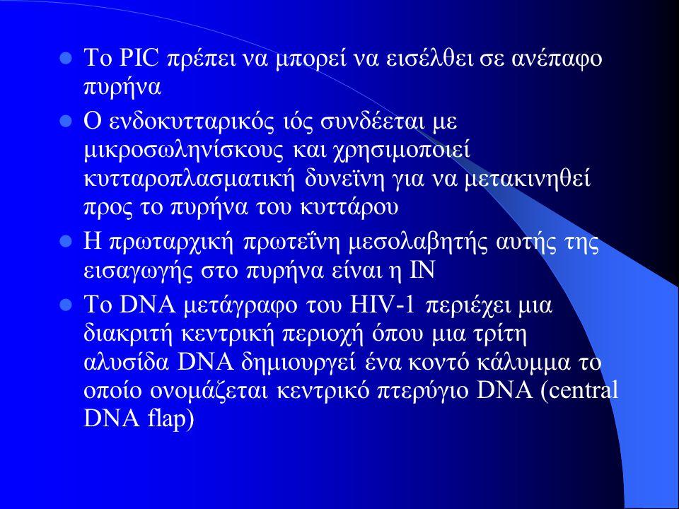 Το PIC πρέπει να μπορεί να εισέλθει σε ανέπαφο πυρήνα Ο ενδοκυτταρικός ιός συνδέεται με μικροσωληνίσκους και χρησιμοποιεί κυτταροπλασματική δυνεϊνη για να μετακινηθεί προς το πυρήνα του κυττάρου Η πρωταρχική πρωτεΐνη μεσολαβητής αυτής της εισαγωγής στο πυρήνα είναι η IN Το DNA μετάγραφο του HIV-1 περιέχει μια διακριτή κεντρική περιοχή όπου μια τρίτη αλυσίδα DNA δημιουργεί ένα κοντό κάλυμμα το οποίο ονομάζεται κεντρικό πτερύγιο DNA (central DNA flap)