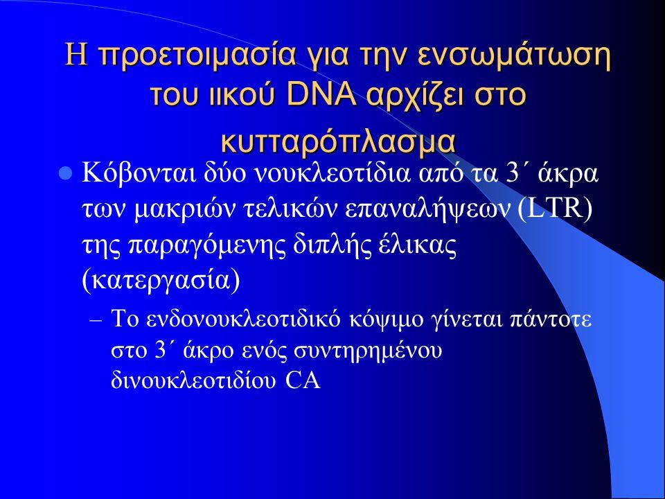 Η προετοιμασία για την ενσωμάτωση του ιικού DNA αρχίζει στο κυτταρόπλασμα Κόβονται δύο νουκλεοτίδια από τα 3΄ άκρα των μακριών τελικών επαναλήψεων (LTR) της παραγόμενης διπλής έλικας (κατεργασία) – Το ενδονουκλεοτιδικό κόψιμο γίνεται πάντοτε στο 3΄ άκρο ενός συντηρημένου δινουκλεοτιδίου CA