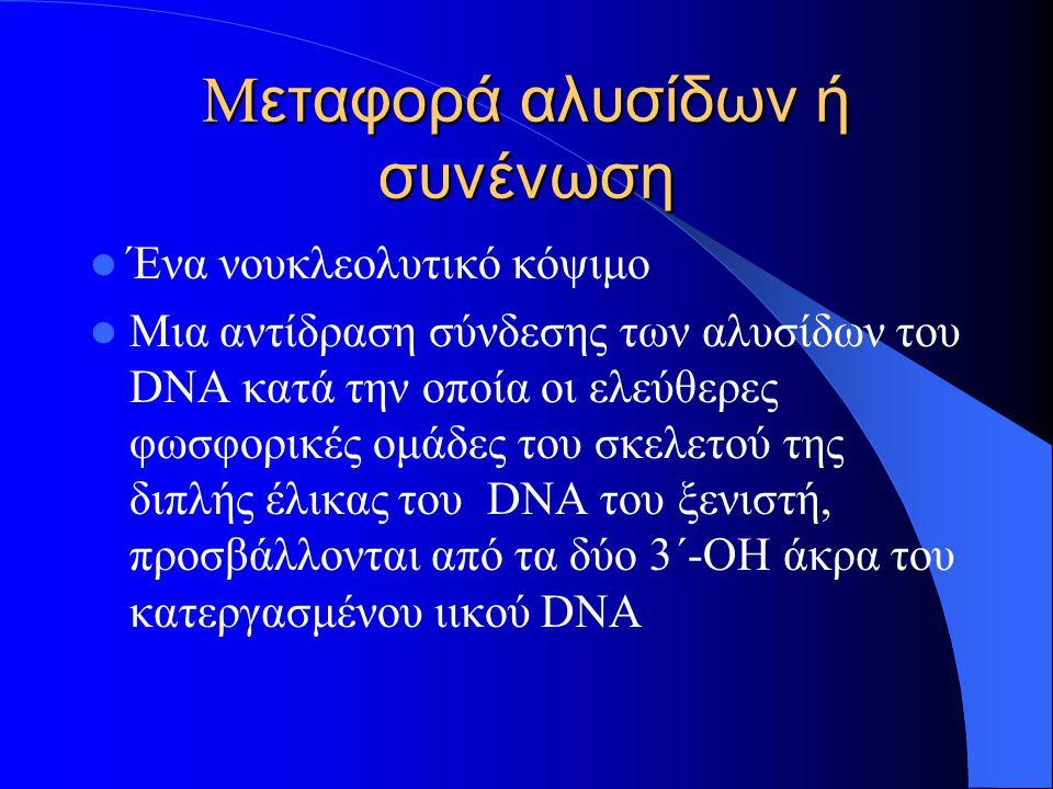 Μ εταφορά αλυσίδων ή συνένωση Ένα νουκλεολυτικό κόψιμο Μια αντίδραση σύνδεσης των αλυσίδων του DNA κατά την οποία οι ελεύθερες φωσφορικές ομάδες του σκελετού της διπλής έλικας του DNA του ξενιστή, προσβάλλονται από τα δύο 3΄-ΟΗ άκρα του κατεργασμένου ιικού DNA
