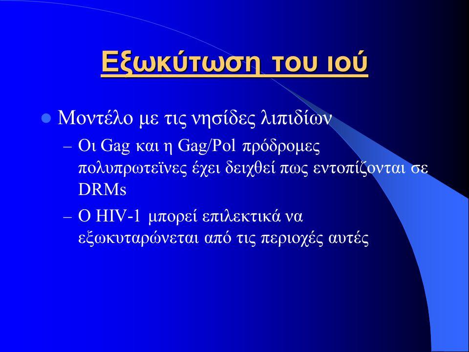 Εξωκύτωση του ιού Μοντέλο με τις νησίδες λιπιδίων – Οι Gag και η Gag/Pol πρόδρομες πολυπρωτεϊνες έχει δειχθεί πως εντοπίζονται σε DRMs – Ο HIV-1 μπορεί επιλεκτικά να εξωκυταρώνεται από τις περιοχές αυτές