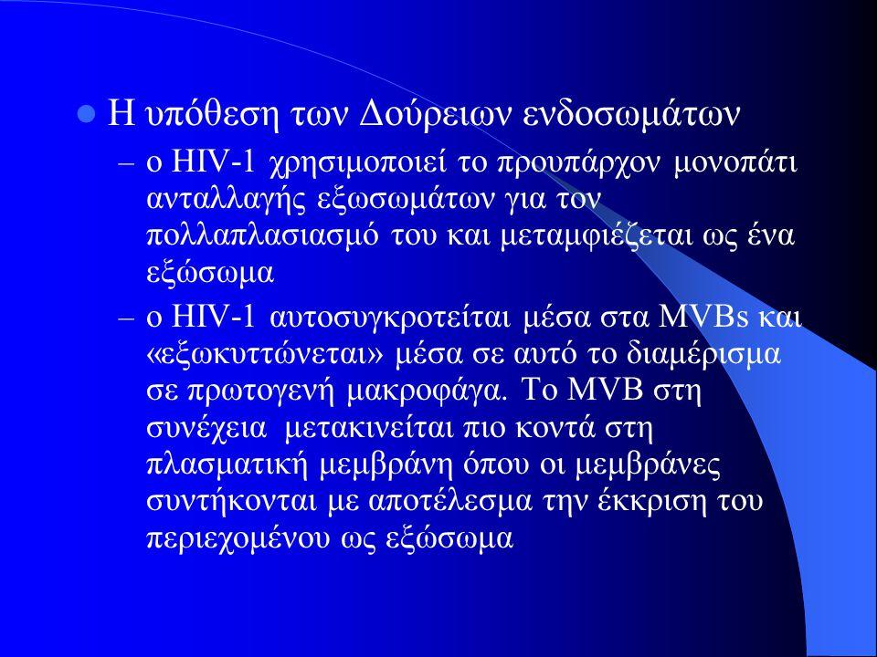 Η υπόθεση των Δούρειων ενδοσωμάτων – ο HIV-1 χρησιμοποιεί το προυπάρχον μονοπάτι ανταλλαγής εξωσωμάτων για τον πολλαπλασιασμό του και μεταμφιέζεται ως ένα εξώσωμα – ο HIV-1 αυτοσυγκροτείται μέσα στα MVBs και «εξωκυττώνεται» μέσα σε αυτό το διαμέρισμα σε πρωτογενή μακροφάγα.