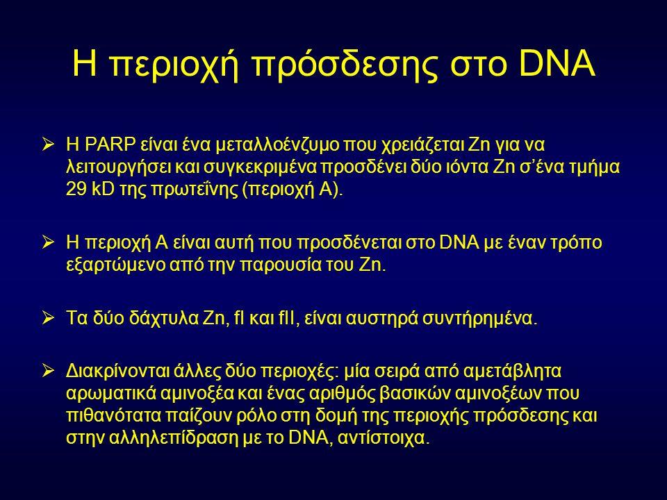 Η περιοχή πρόσδεσης στο DNA  H PARP είναι ένα μεταλλοένζυμο που χρειάζεται Zn για να λειτουργήσει και συγκεκριμένα προσδένει δύο ιόντα Zn σ'ένα τμήμα