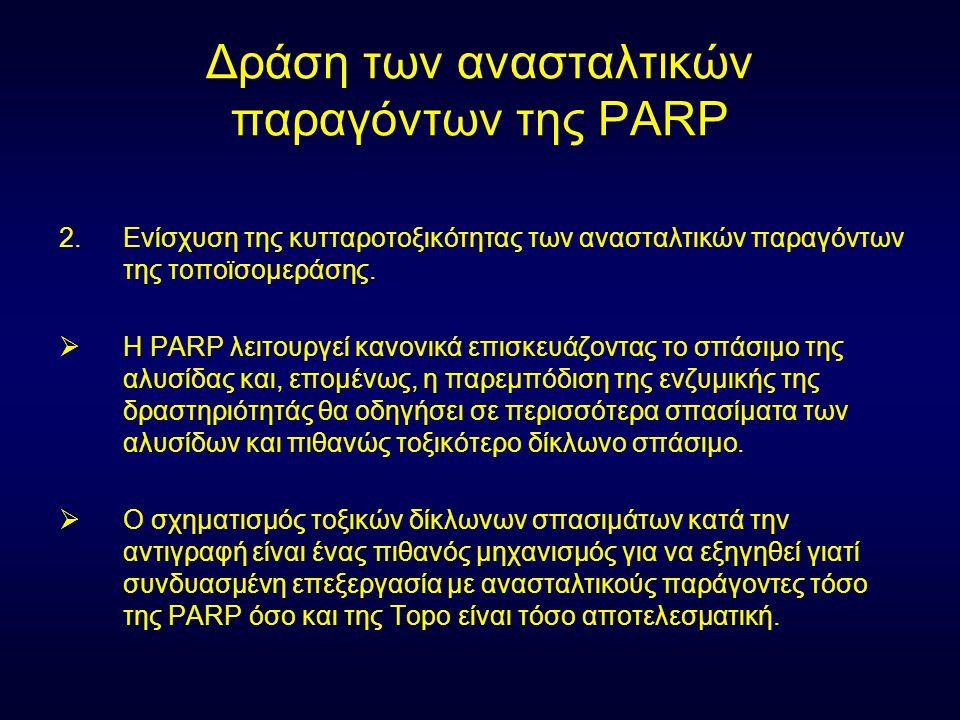 Δράση των ανασταλτικών παραγόντων της PARP 2.Ενίσχυση της κυτταροτοξικότητας των ανασταλτικών παραγόντων της τοποϊσομεράσης.  Η PARP λειτουργεί κανον