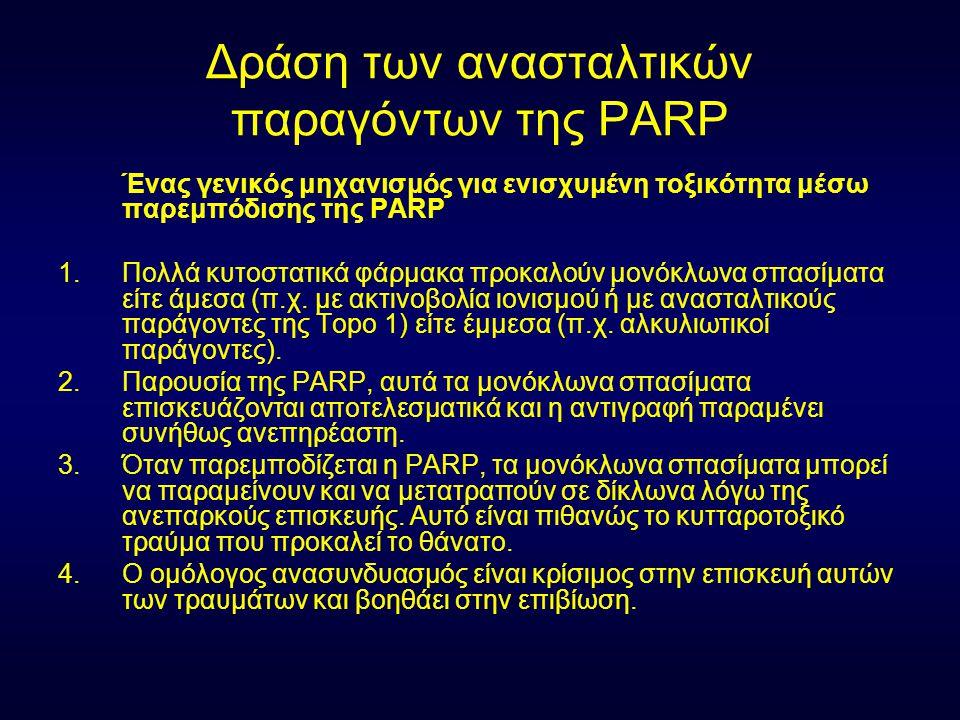 Δράση των ανασταλτικών παραγόντων της PARP Ένας γενικός μηχανισμός για ενισχυμένη τοξικότητα μέσω παρεμπόδισης της PARP 1.Πολλά κυτοστατικά φάρμακα πρ