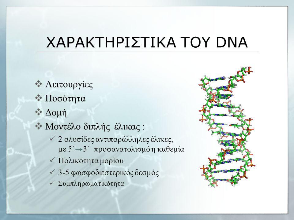 ΧΑΡΑΚΤΗΡΙΣΤΙΚΑ ΤΟΥ DNA  Λειτουργίες  Ποσότητα  Δομή  Μοντέλο διπλής έλικας : 2 αλυσίδες αντιπαράλληλες έλικες, με 5΄ 3΄ προσανατολισμό η καθεμία Π