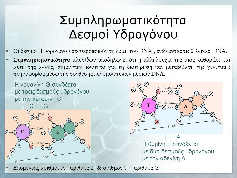 Συμπληρωματικότητα Δεσμοί Υδρογόνου  Οι δεσμοί Η υδρογόνου σταθεροποιούν τη δομή του DNA, ενώνοντας τις 2 έλικες DNA.  Συμπληρωματικότητα αλυσίδων υ
